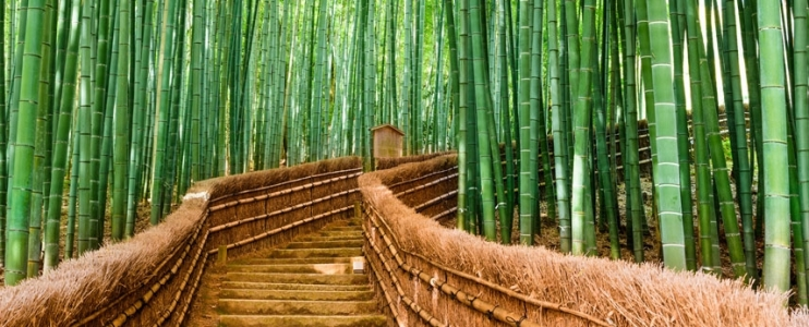 The road to success is paved with patience – the story of Chinese bamboo